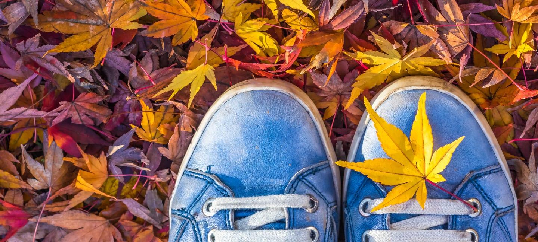 Gesund durch den Herbst